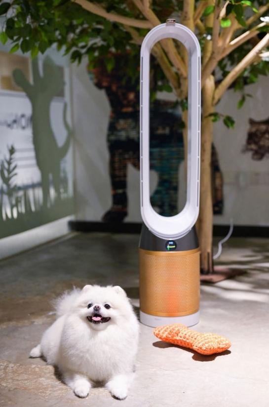 """""""净是宠爱""""―― 戴森科技为爱宠家庭营造洁净居家环境"""